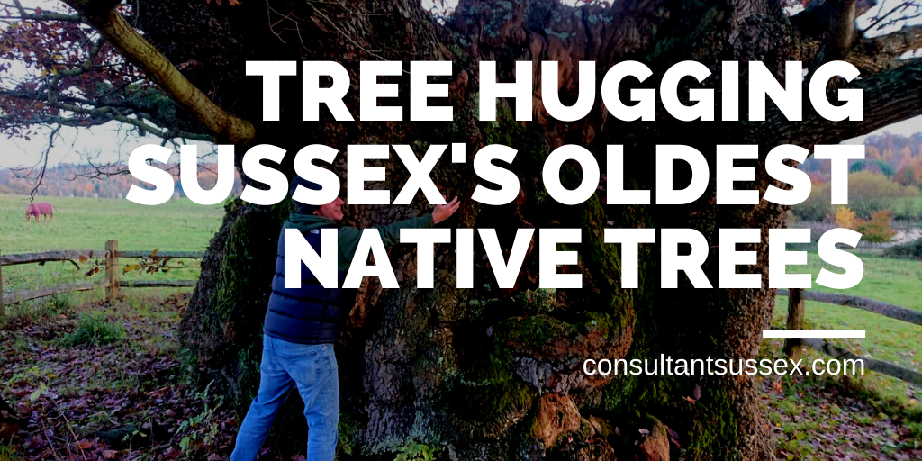 Tree Hugging Sussex's Oldest Trees